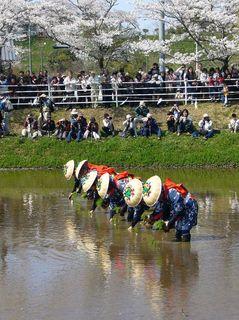 800px-Rice-transplanting_Festival_in_Katori-jingu_1,katori-city,japan.jpg