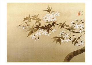 「夜桜」.jpg