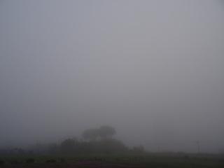 五里霧中.JPG