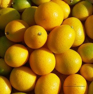 熟した金柑の果実.jpg