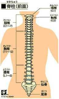 腰椎.jpg
